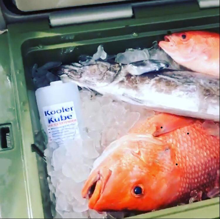 fish-in-ice-kube